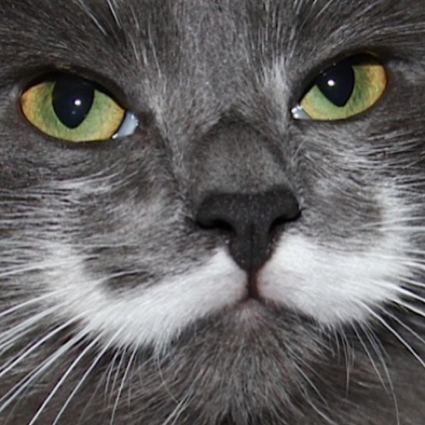 A Hipster Cat That Has Real Mustache