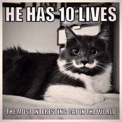 5 liam thinks! a 'hipster cat' that has a real mustache