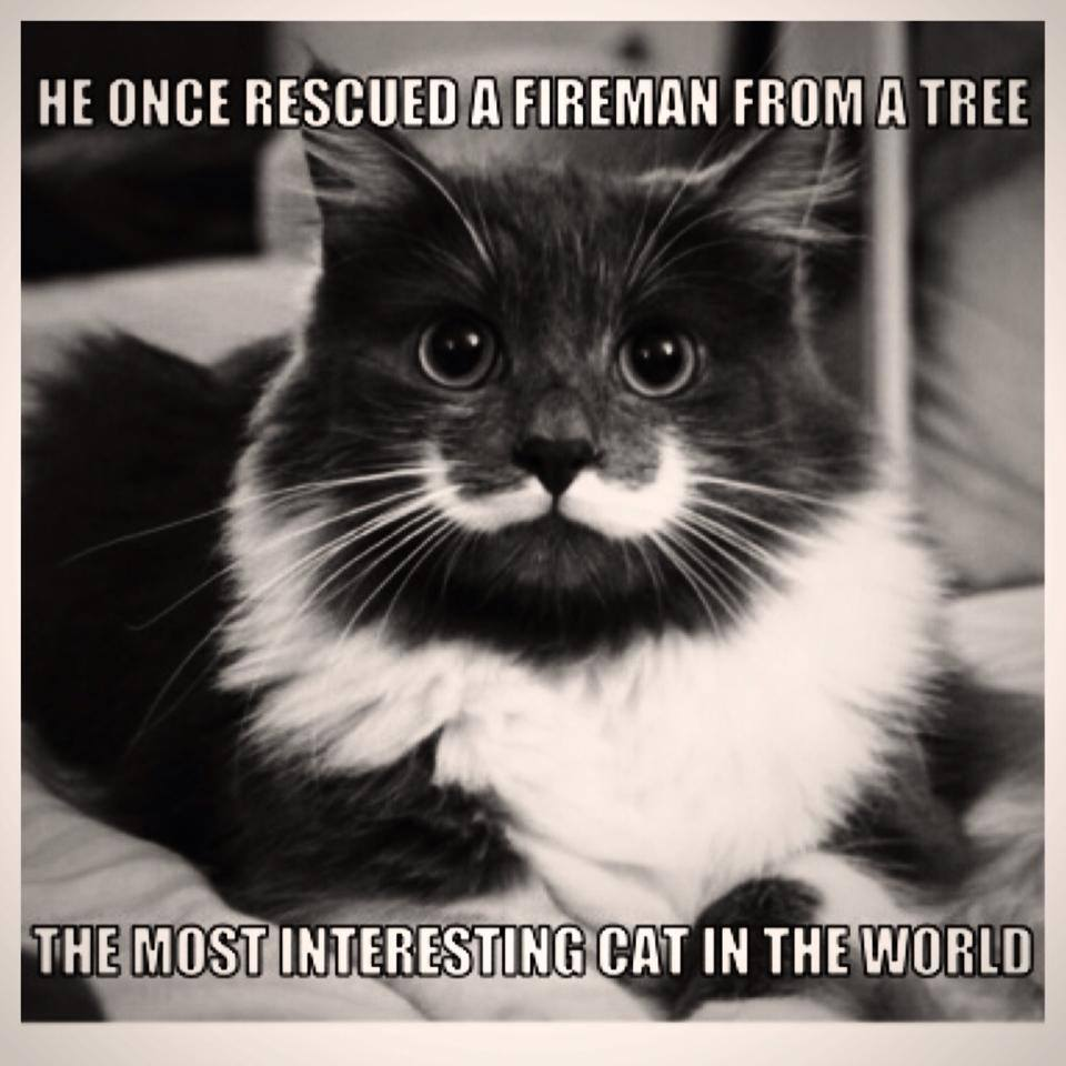 8 liam thinks! a 'hipster cat' that has a real mustache