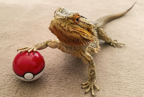 Humorous photographs document the funny antics of an expressive bearded dragon designtaxi com