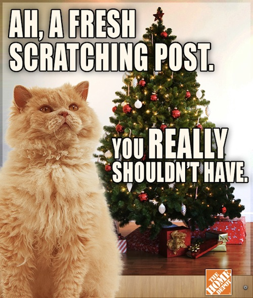3 a grumpy cat complains about the holiday season designtaxi com