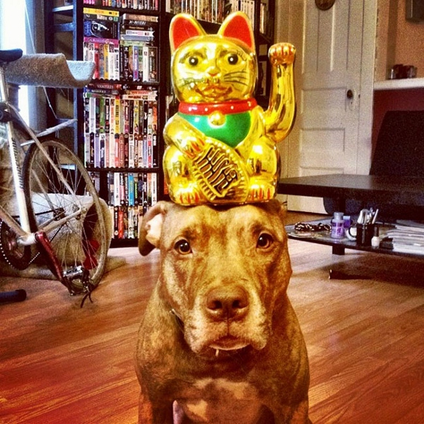 This Adorable Dog Can Balance Just About Anything On His Head - Owners balances objects on dogs head