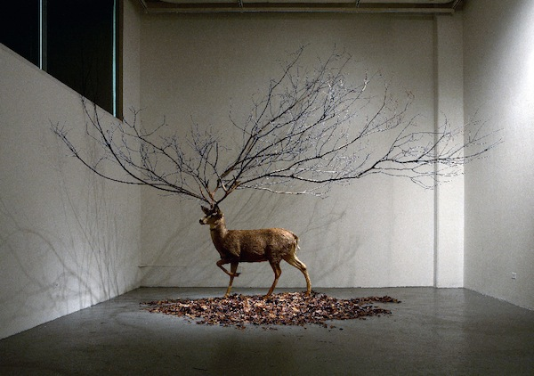 South Korean Artist Combines Nature And Man Made In
