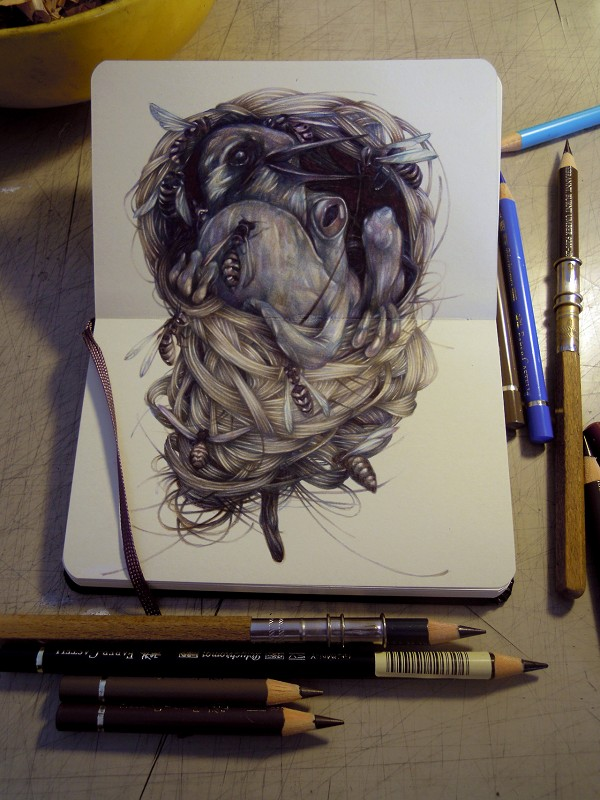 Amazing Illustrations Of Animals That Seem To Pop Up From Sketchbooks - DesignTAXI.com