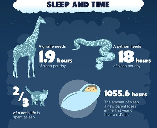Infographic 30 Interesting Fun Facts About Sleep DesignTAXIcom