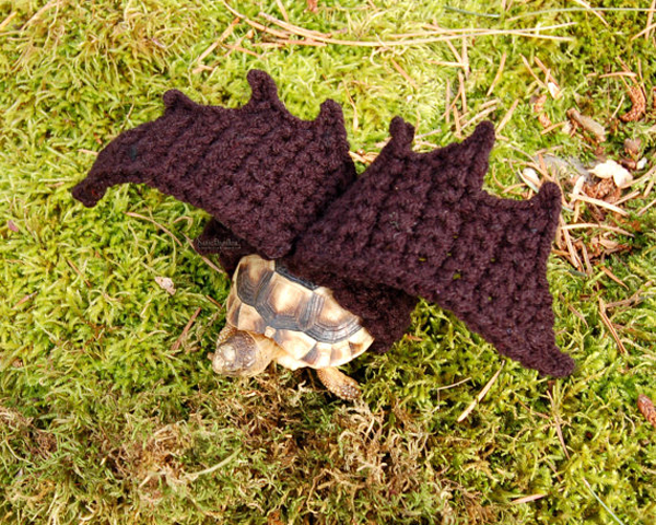 Knitting Pattern For Tortoise Jumper : Artist Knits Adorable Crocheted Sweaters For Tortoises - DesignTAXI.com
