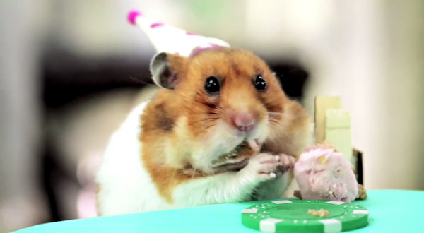 Awww Adorable Hamsters Attend A Cute Hedgehog S Birthday