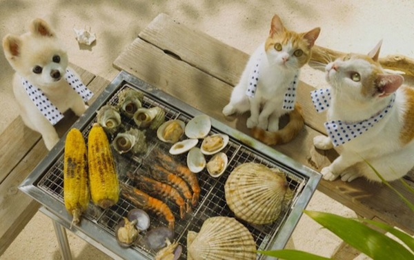 In Japan Adorable Cats Are Used To Promote Tourism