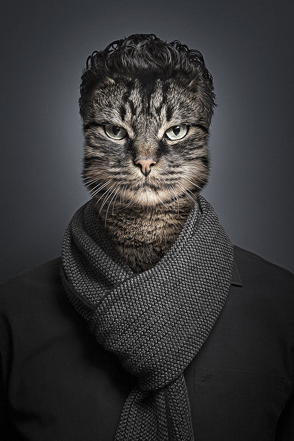 Funny Portraits Of Cats Dressed As Their Owners