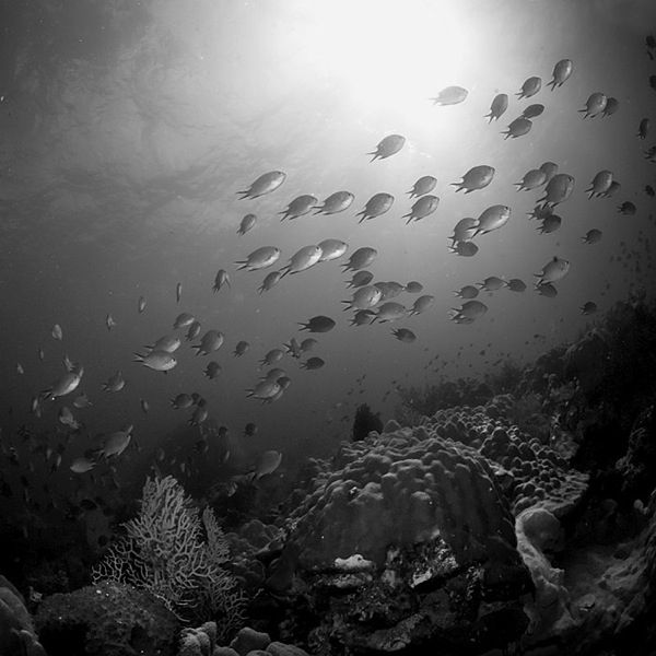 Dark Brooding Underwater Photography Like You Ve Never