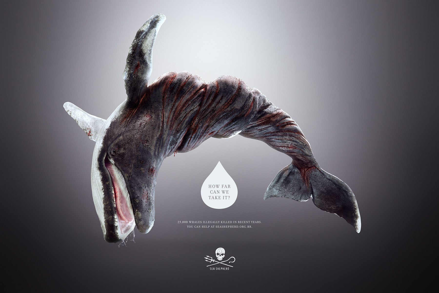 For Animal Slaughter Awareness: Powerful Visuals Of A ...