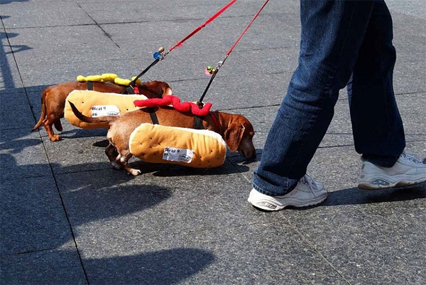 Dachshunds Dress In Hot Dog Costumes For The Running Of