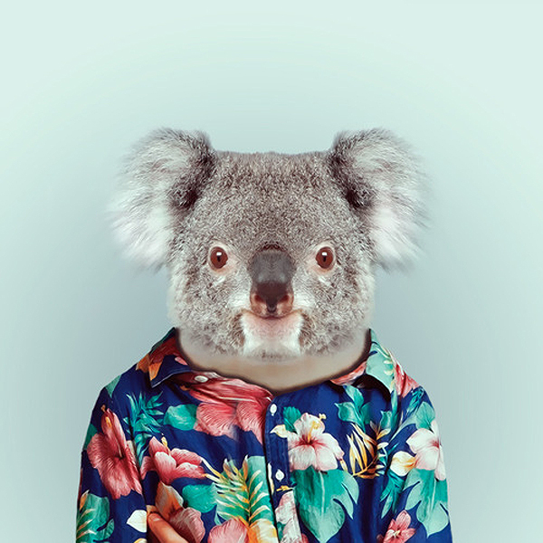 Animals wearing human clothes