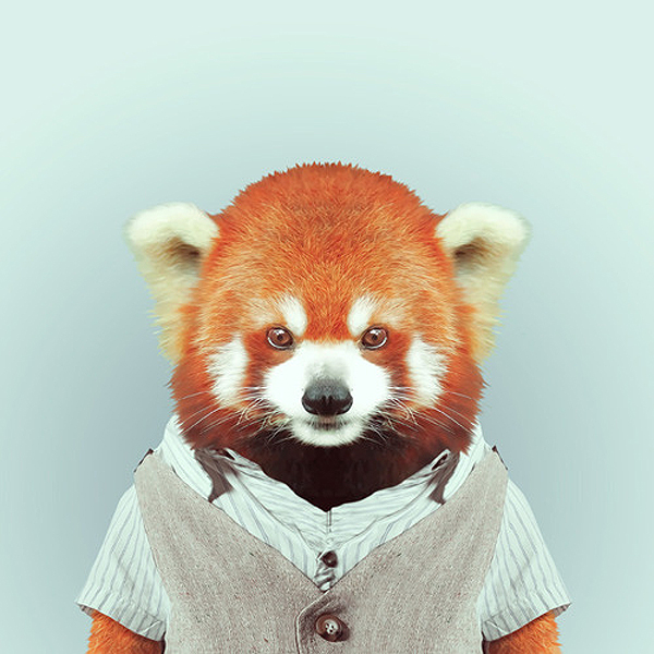 Animals wearing clothes - photo#5